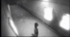 Northampton Rape Suspect