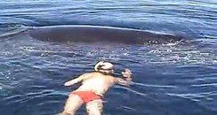 humpback rescue