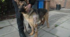 Aman police dog