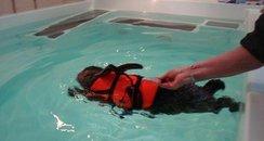 Rabbit Hydrotherapy