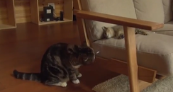 A cat playing with a kitten on a chair