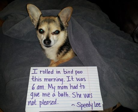 Best Dog Shaming Moments Ever Heart