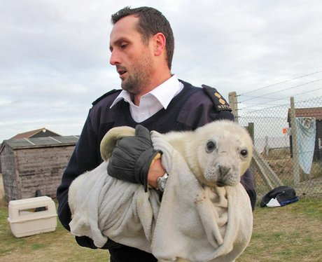 an officer carrying an orphaned seal pup