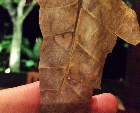 a leaf with a heart shape in it