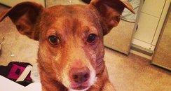 Dennis The Dog