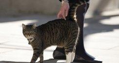 downig street cat