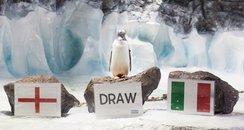 Penguin Predictions