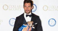 David Gandy Battersea Dogs' Collars & Coats Gala B