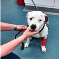 Wansford Dog Shot With Crossbow