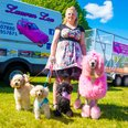 Race for Life Norwich 2015 Sun Dashing Dogs