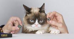 Grumpy Cat waxwork