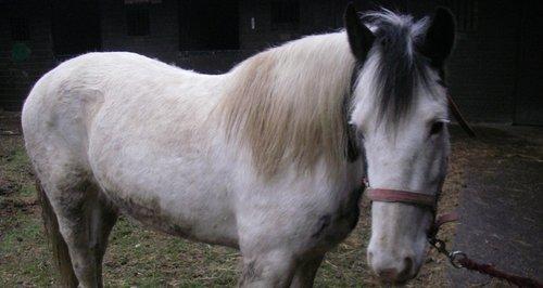neglected horses Osborne House