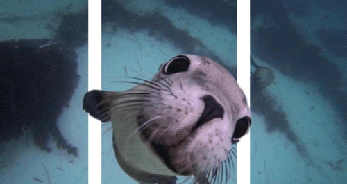 3D seal gif