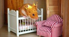Royal hamster