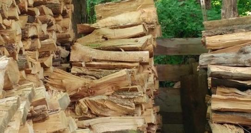 cat hidden in the logs optical illusion answer