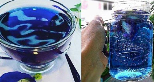 Blue Tea Canvas