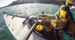 adventurous kittens bolt and keel