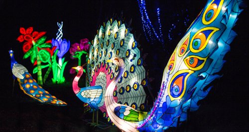 Magic Lanterns Peacock lights