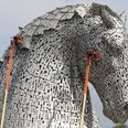 Kelpies get health check